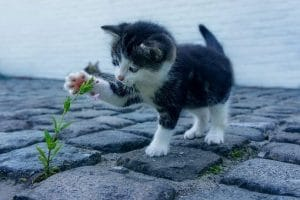 Meddig él egy cica?