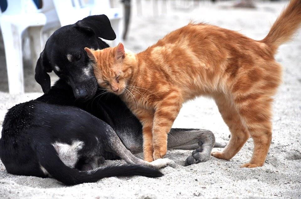 Cicák összeszoktatása más állattal