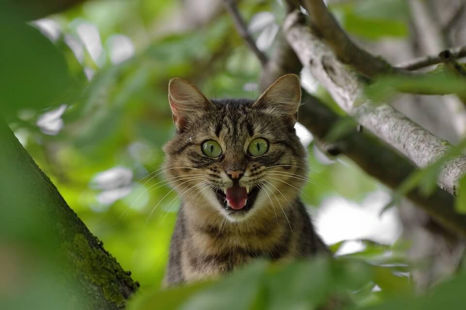 Macska agresszió