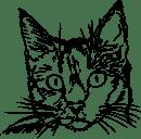 Macskanevek, cica nevek