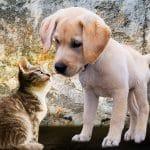 Cicám legyen vagy kutyám?