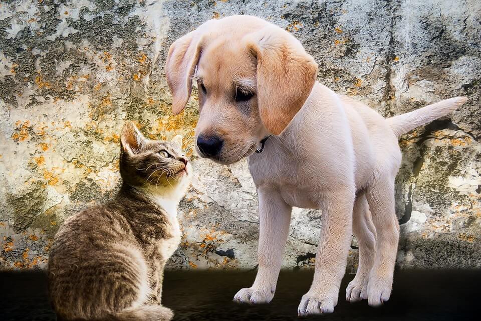 Cica vagy kutya?