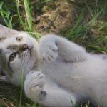 Cicát szeretnék – de biztos jó lesz?