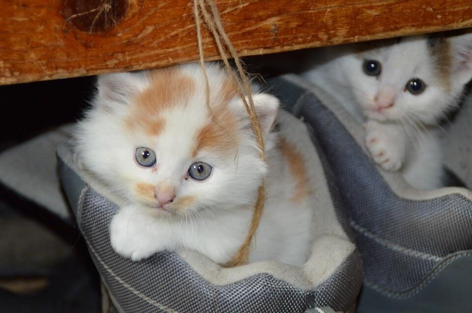 Cicát szeretnék