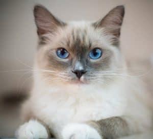 Kijárós cica