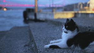 Kedi – Isztambul macskái