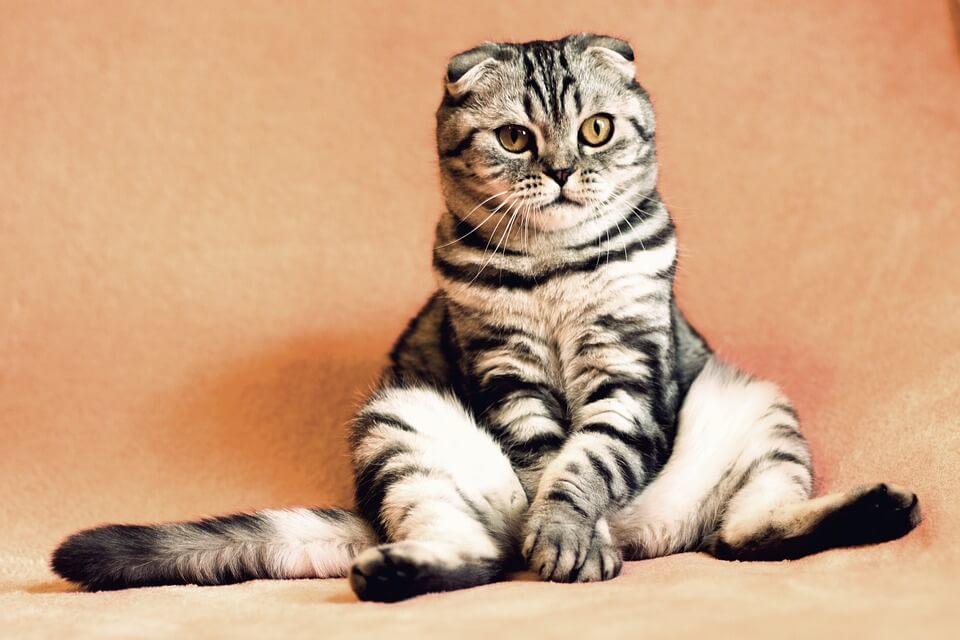 """Macska unatkozik - a figyelemfelkeltő: """"unatkozom, foglalkozz velem!"""