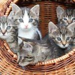 Több cica együtt?