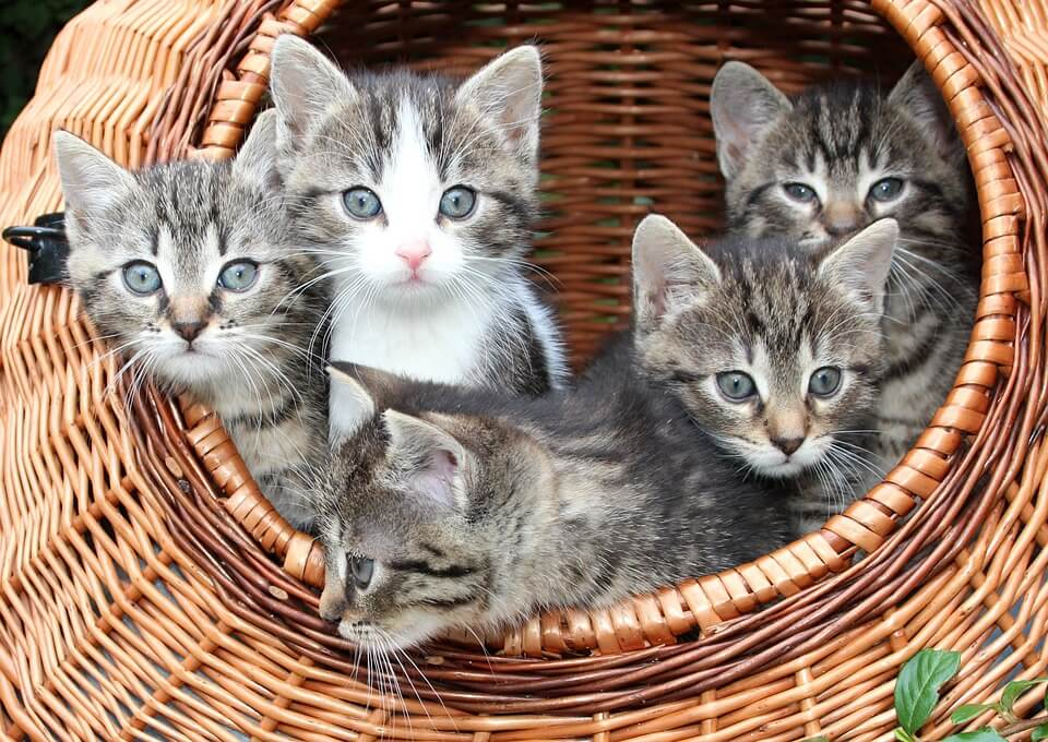 Több cica együtt