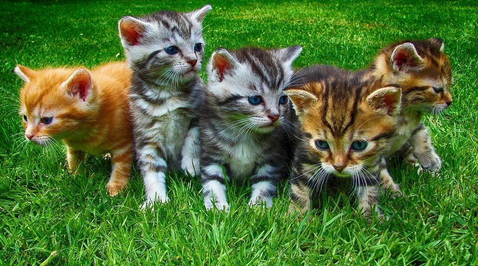 B betűs macska nevek, melyik illik hozzá a legjobban?