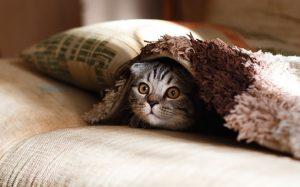 Mitől félnek a cicák?