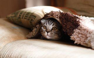 Albérlet cicával