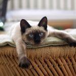 Miért dorombolnak a cicák?