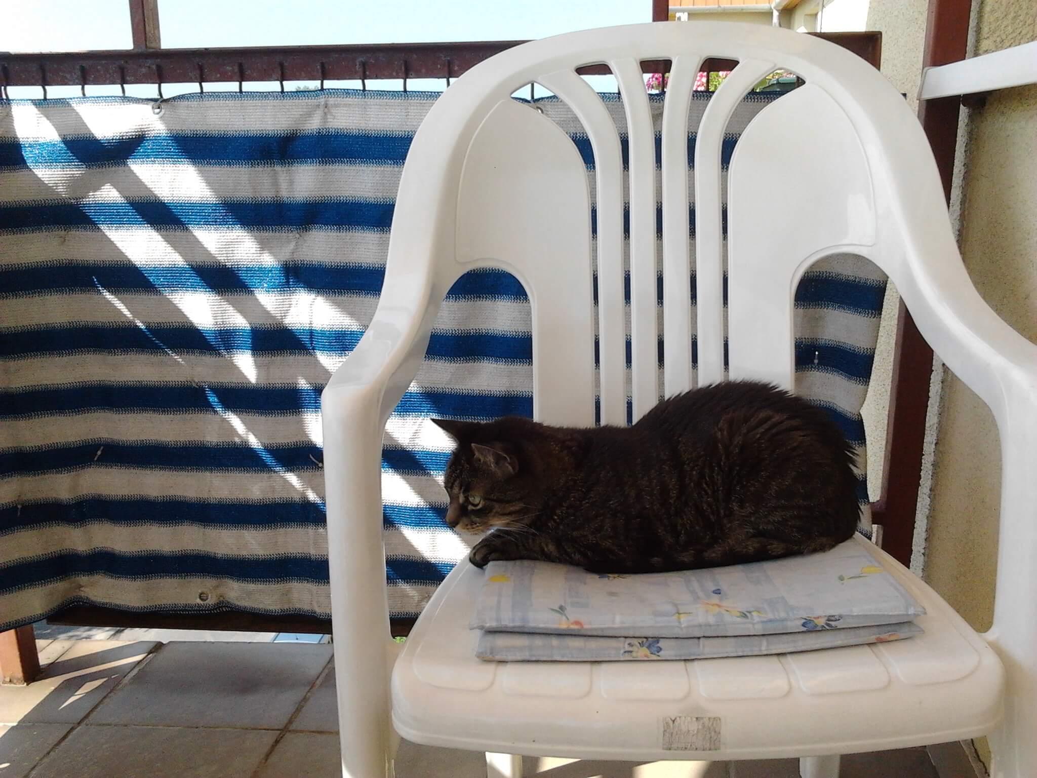 Cicatanítás - felugrás a székre