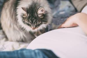 Toxoplamózis és a cica