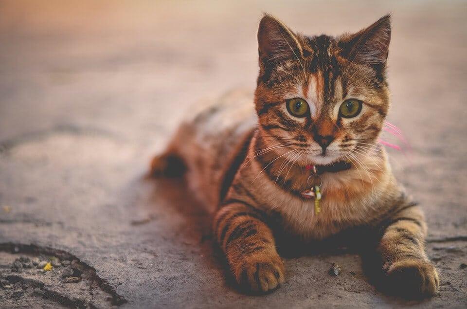 Macskaetológia, Cicák és névfelismerés