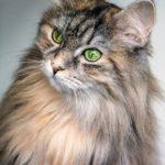 Cicák és a mutatás – Macskaetológia, avagy hírek a tudomány világából