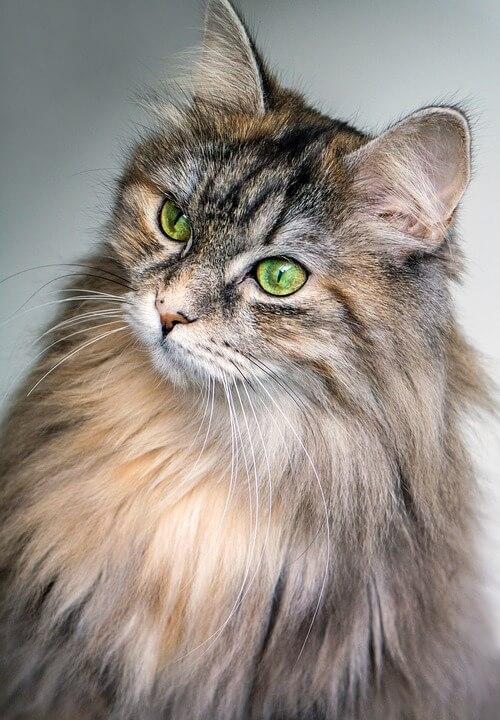 Cicák és a mutatás - Macskaetológia