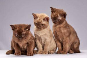 Macskafajták
