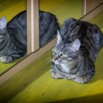 Cica és tükörképe – mit kell tenni, ha nehezen szokja meg
