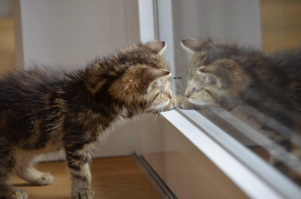 Cica és tükörképe