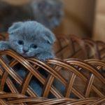 Tévhitek a macskákról – 7+1 városi legenda, ami vagy igaz, vagy nem