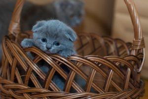 Tévhitek a macskákról