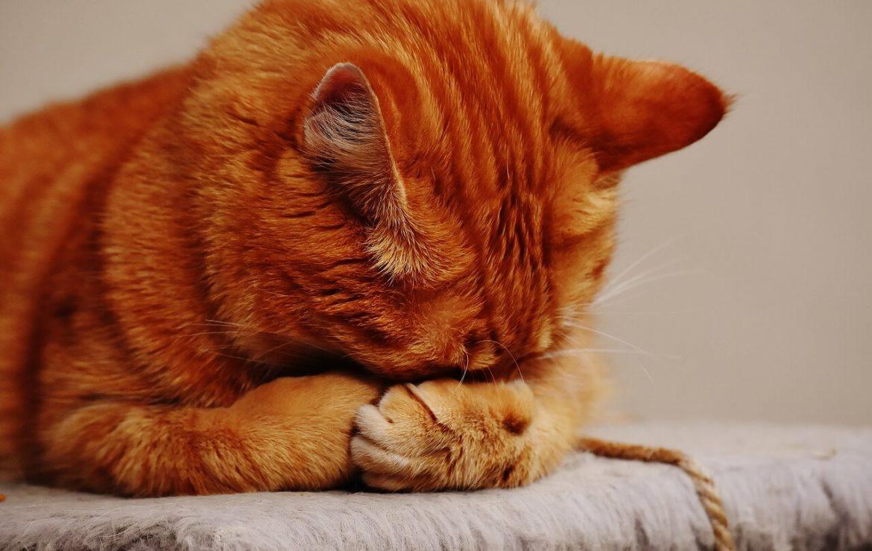 Mit utálnak a cicák?