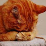 Mit utálnak a cicák? – 10+1 dolog, amit kerülj, ha macskád van