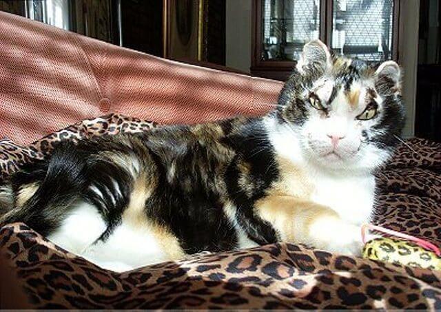 Híres cicák Scarlett cica