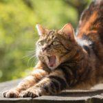 Híres cicák – Emily