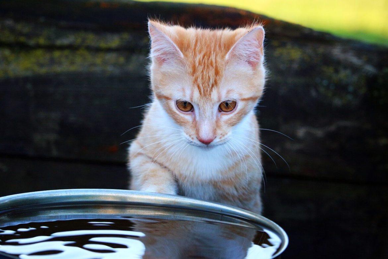 Cica és víz