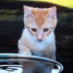 Cica és víz – mi az oka annak, hogy nem szeretik?