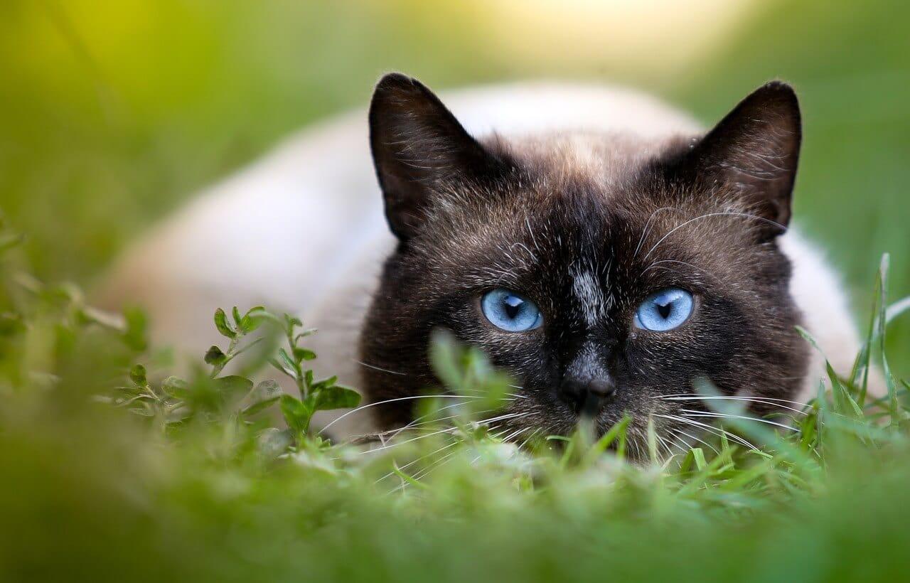 Macskaszem, a cica éles látására utalhat