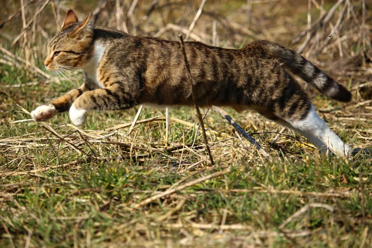 Cicás szólások: Alamuszi macska nagyot ugrik...