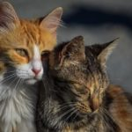 Alamuszi macska, avagy cicás szólások, közmondások