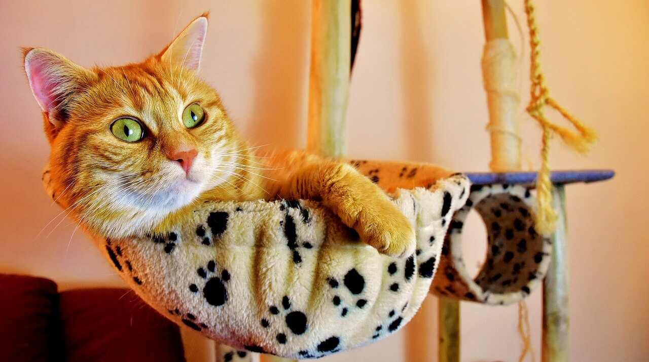 Vörös cica nevek