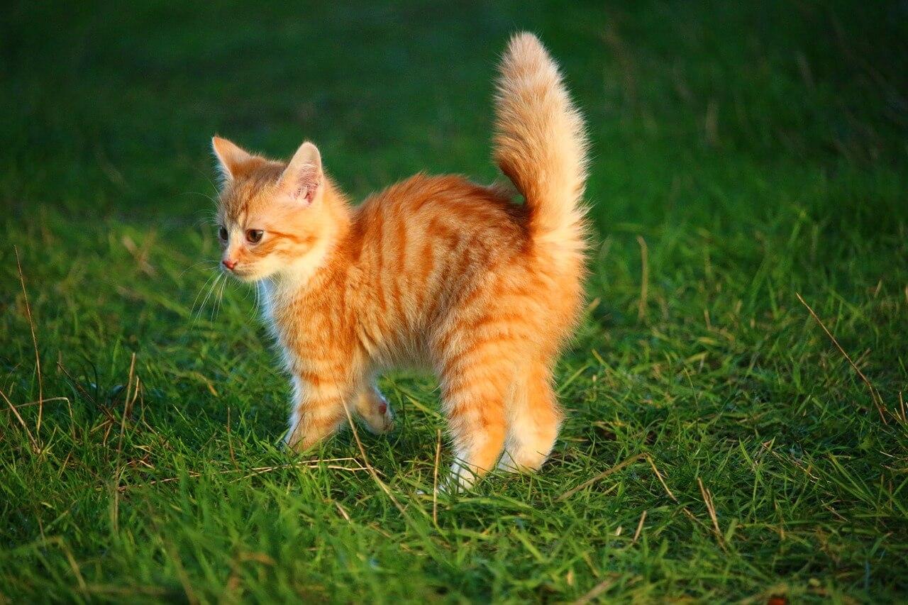 Vörös cica nevek, vörös macska nevek