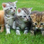 A betűs macska nevek
