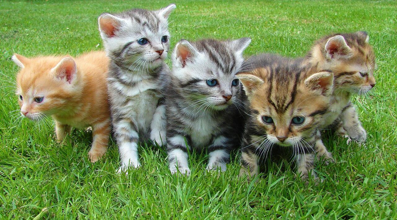 A betűs macska nevek, melyik illik hozzá a legjobban?