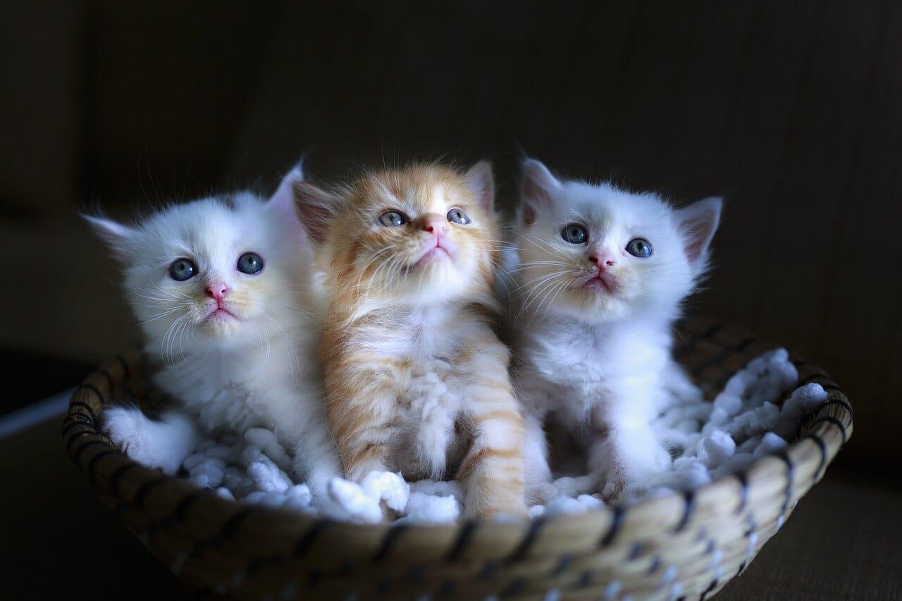 R betűs macska nevek, melyik illik hozzá a legjobban? Cica nevek