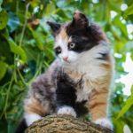 Foltos cica nevek- Foltos macskanevek