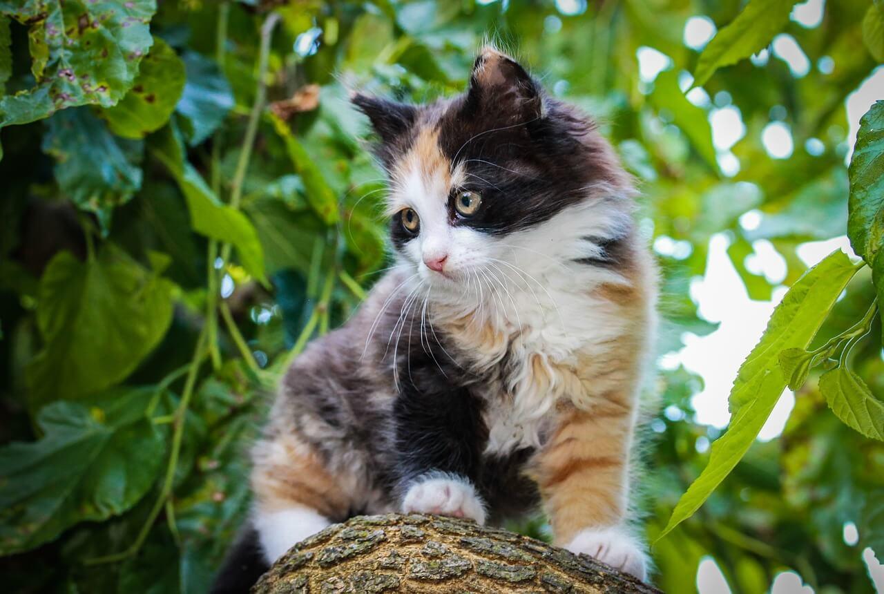 Foltos cica nevek