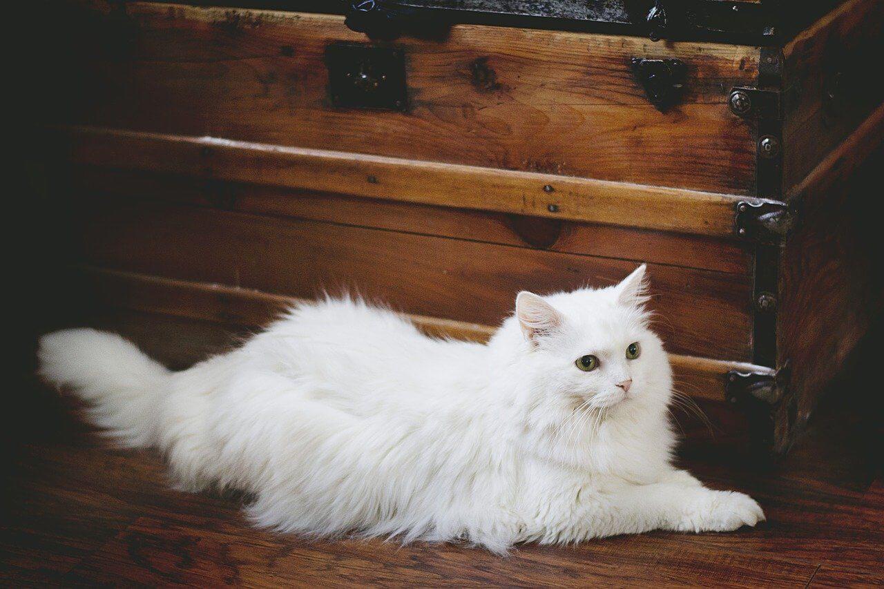 Fehér macska nevek, fehér cica nevek