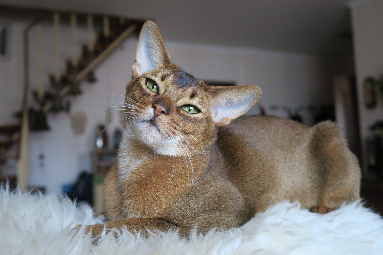 Egyiptomi macska nevek