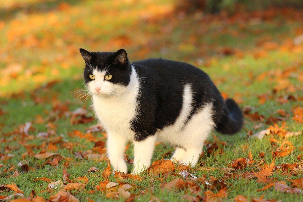 Fekete fehér cica nevek, melyik illik hozzá a legjobban?