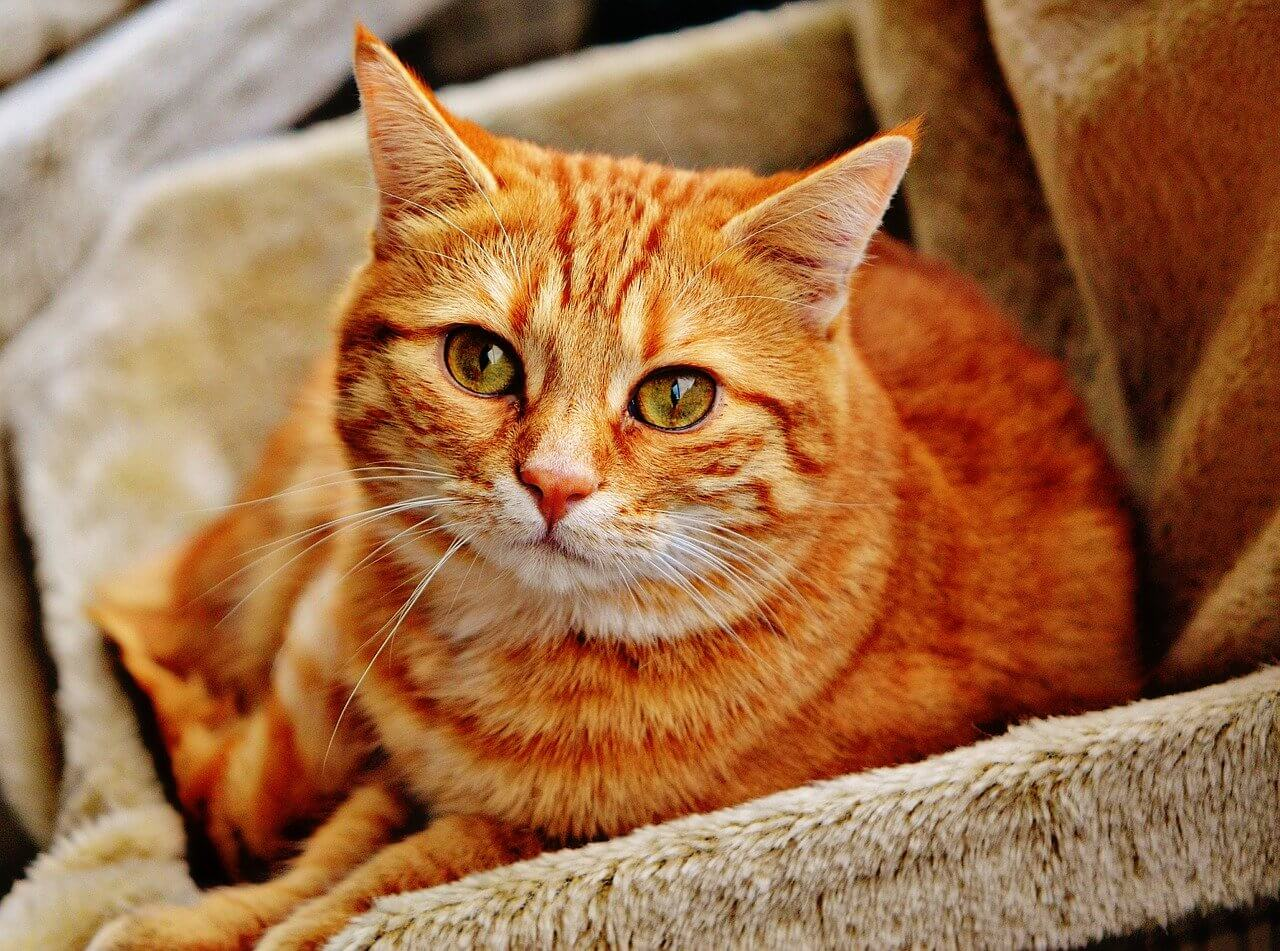 Narancssárga macskanevek