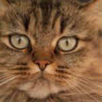 A macska bajsza – most mindent megtudhatsz róla